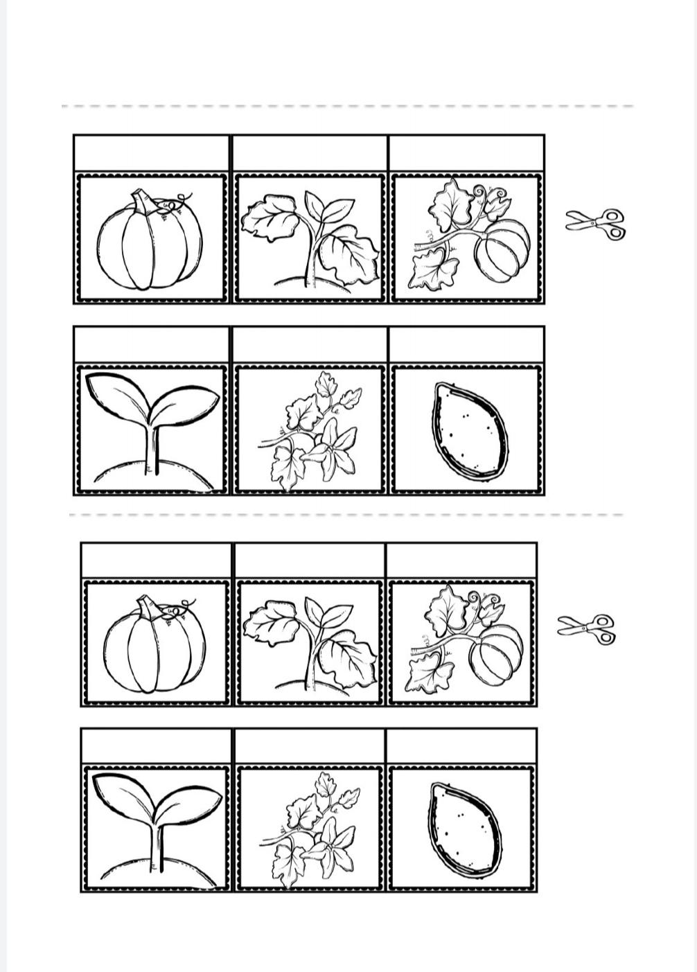 scheda didattica Ciclo vitale della zucca della maestra Pilly Pilly scienze matematica scuola primaria classe seconda