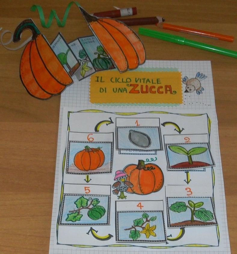 Ciclo vitale della zucca della maestra Pilly Pilly scienze matematica scuola primaria classe seconda
